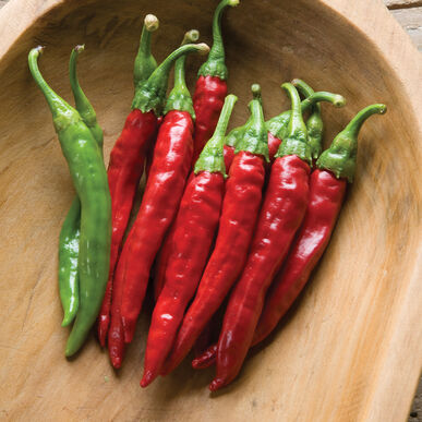 Red Rocket Hot Peppers