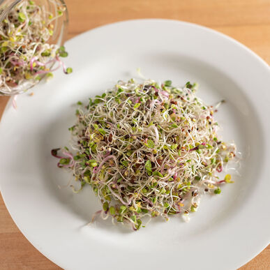 Sprouting Mix Sprouts