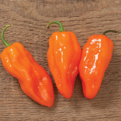 Helios Hot Peppers