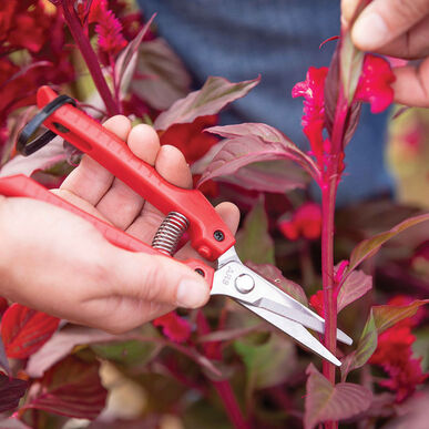 ARS SE45 Floral Snips Cut-Flower Supplies