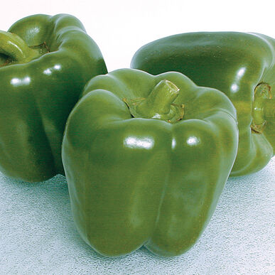Orion Sweet Bell Peppers