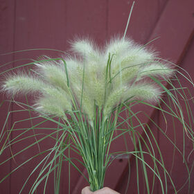 Feathertop Grasses, Ornamental