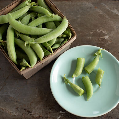 PLS 141 Snap Peas