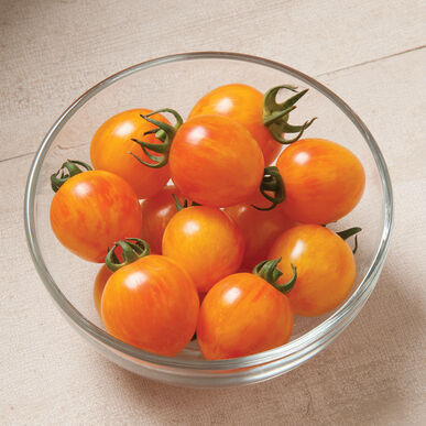Sunrise Bumble Bee Specialty Tomatoes