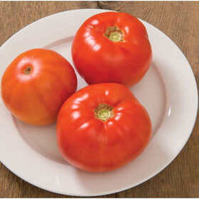 Skyway Beefsteak Tomatoes