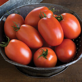 Plum Regal Paste Tomatoes
