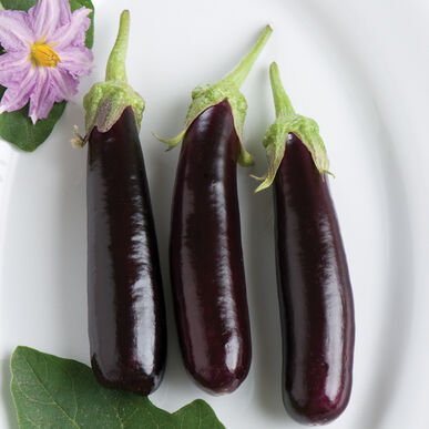 Hansel Mini Eggplants