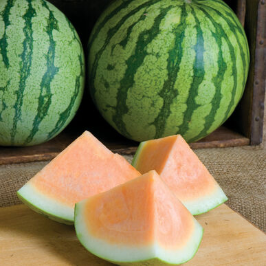 Orange Crisp Triploid Watermelons (Seedless)
