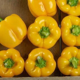 Brocanto Sweet Bell Peppers
