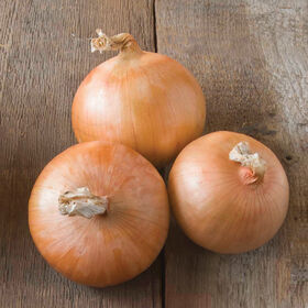 Candy Full-Size Onions