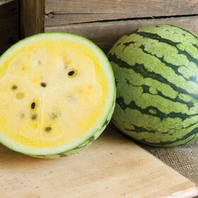 Sunshine Diploid Watermelons