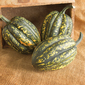 Starry Night PMR Winter Squash
