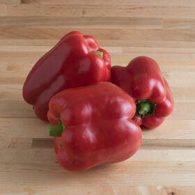Yankee Bell Sweet Bell Peppers