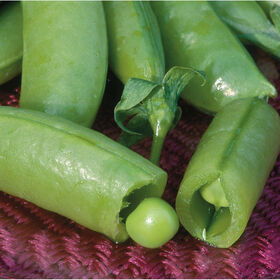 Super Sugar Snap Snap Peas