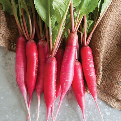 Shunkyo Semi-Long Specialty Radishes