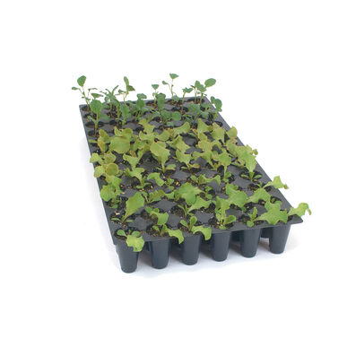 Pro-Tray 72 Cell Flats – 100 Count Trays, Domes, and Flats