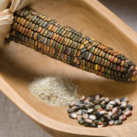 Earth Tones Dent Dry Corn