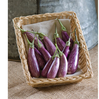Fairy Tale Mini Eggplants