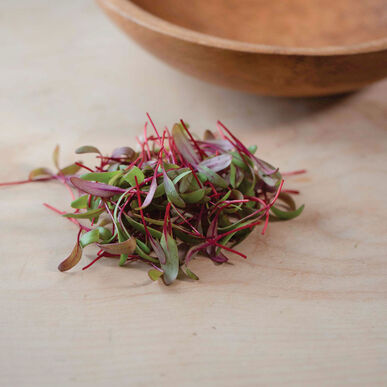 Beet, Red Leaf Microgreen Vegetables
