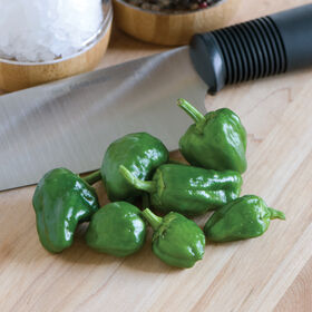 Padron Hot Peppers