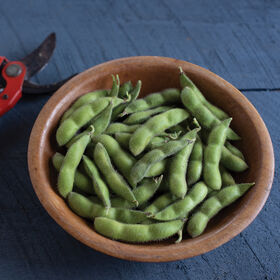 Chiba Green Soybeans