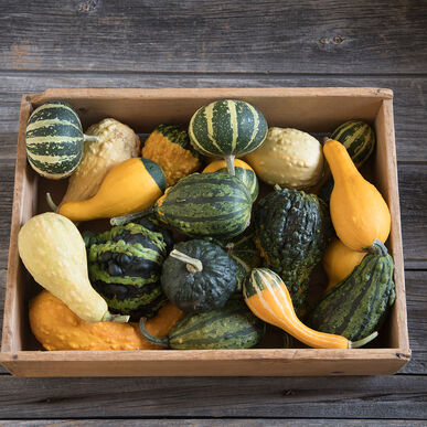 Ornamental Gourds Small Mixed Seed Johnny S Selected Seeds