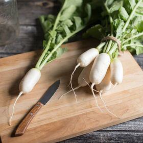 Mini Mak Daikon Radishes