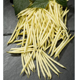 Goldilocks Bush Beans