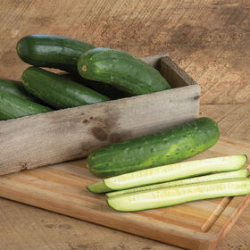 Bristol Slicing Cucumbers