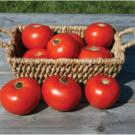 Mountain Fresh Plus Beefsteak Tomatoes
