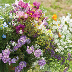 Beneficial Insect Attractant Mix Wildflower Mixes