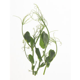 Tendril Pea Shoots