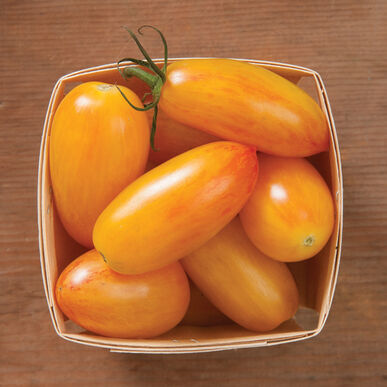 Blush Specialty Tomatoes