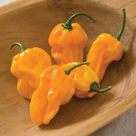 Numex Suave Orange Hot Peppers