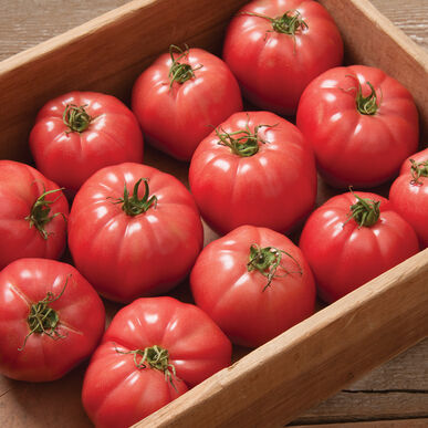 Pink Wonder Specialty Tomatoes