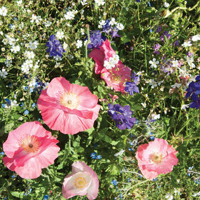 Shade Mix Flower Collections and Mixes