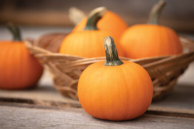Pumpkin Wee Be Little    100 seeds  Need More Ask