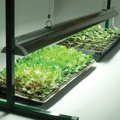 Value Jump Start – 4' Grow Lights and Carts