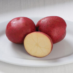 Dark Red Norland Potatoes