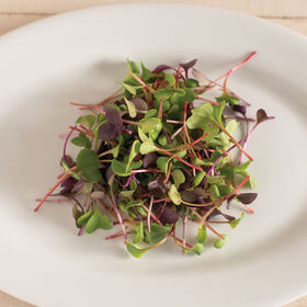 Radish, Confetti Mix Microgreen Mixes