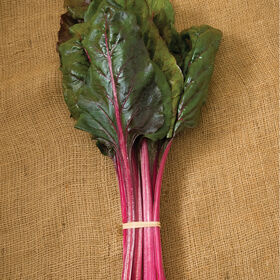 Magenta Sunset Swiss Chard