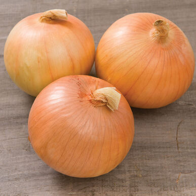 Expression Full-Size Onions
