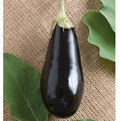 Traviata Italian Eggplants
