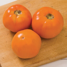 Chef's Choice Orange Specialty Tomatoes