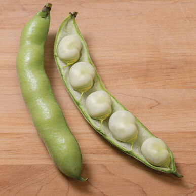 Vroma - Bean Seed | Johnny's Selected Seeds