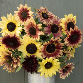 Strawberry Lemonade Mix Tall Sunflowers