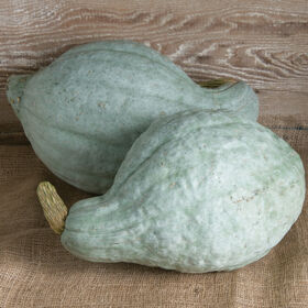 Blue Hubbard Winter Squash