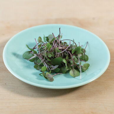 Cabbage, Red Microgreen Vegetables