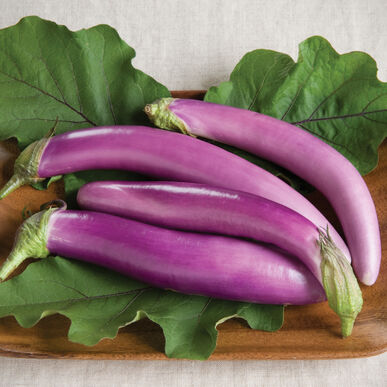 Orient Charm Asian Eggplants