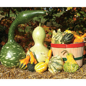 Gourd Collection Gourds